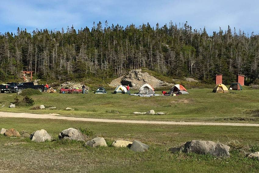A Chance Encounter in Picadilly Head, Newfoundland