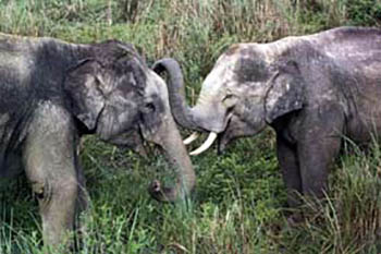 Working with Elephants in Sri Lanka