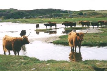 Island Hoppin' in Scotland's Inner Hebrides