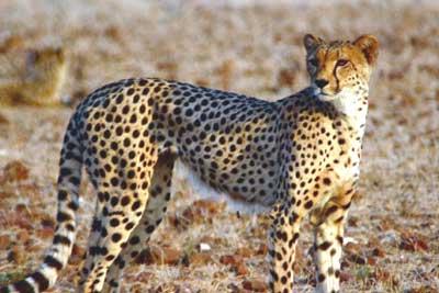 Namibia's Harnas Wildlife Sanctuary