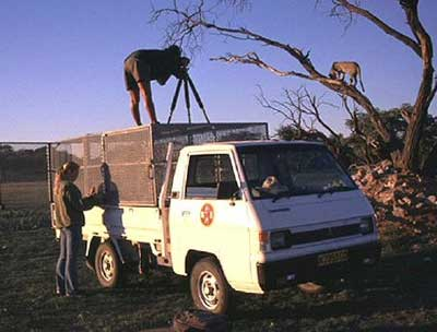 Safari in Africa.