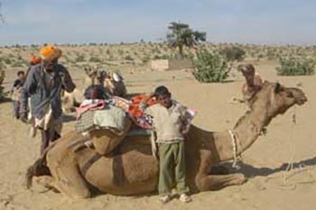 India: The Beginner's Guide to Camel Trekking and Venomous Snakes