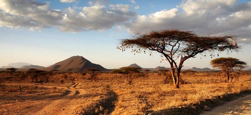 The landscape in Kenya.