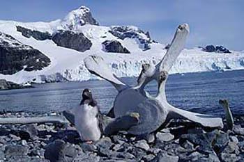 Way, Way Down Under: An Antarctic Safari