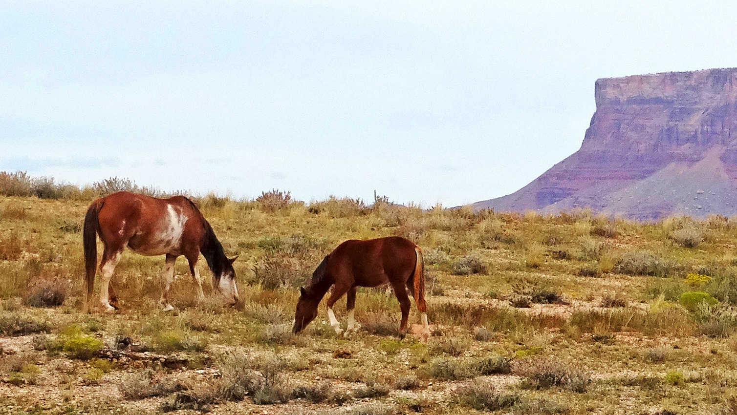 Ponies in Northern Arizona. Don Graham photo.