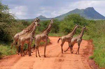 Nairobi to Mombasa: Kenya's Safari Trail