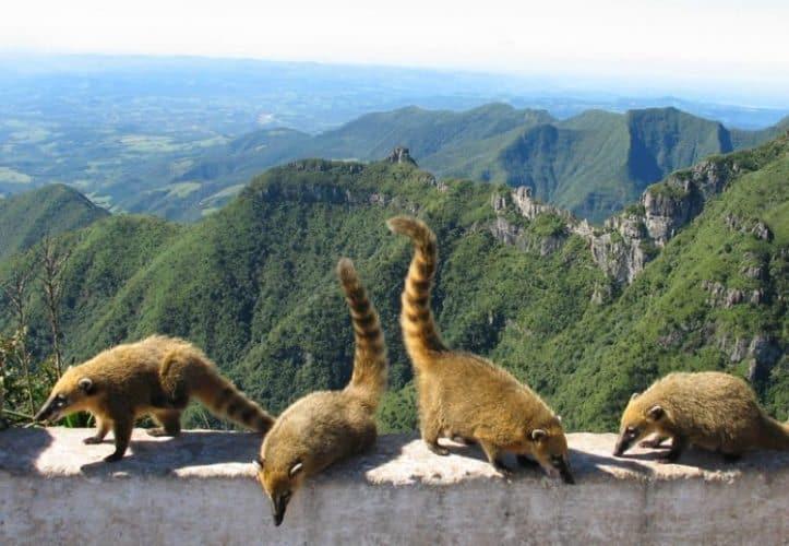 Santa Catarina: A Quiet Corner of Brazil