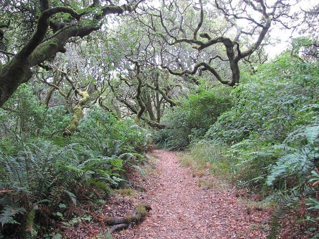 Tomales Bay State Park, Inverness, CA. Photo by Flickr user kid cowboy California off the beaten path.