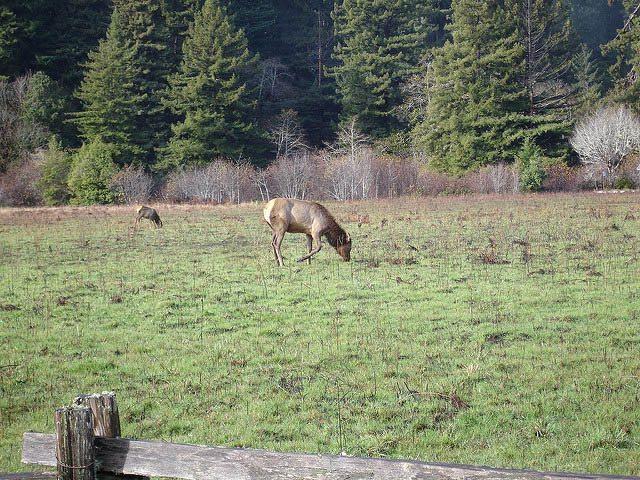 Prairie Creek Redwoods State Park. Photo Flickr user Pablo Marx.