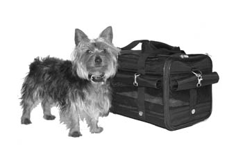 Traveling with Small Dogs: Expert Tips