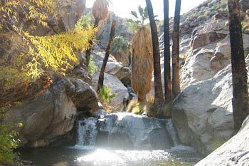 Hiking Palm Spring's Indian Canyon