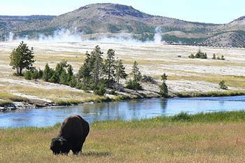 Wyoming: Viewing Wolves in Yellowstone Park