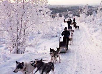 Dogsledding in Finland: Silence Speaks Volumes