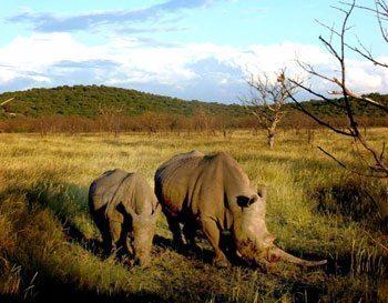Rhinos in Namibia. Janis Turk photo.