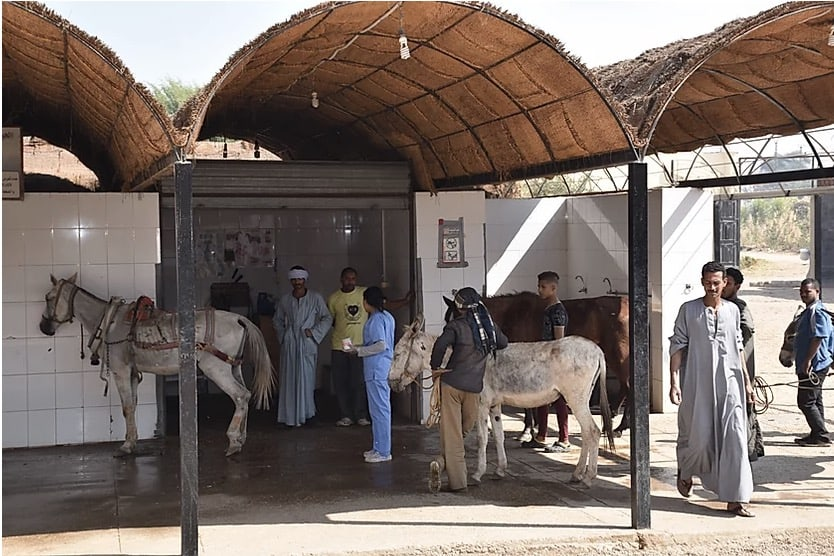 ACE large animal clinic in Luxor, Egypt. ACE photos. Animal Care in Egypt
