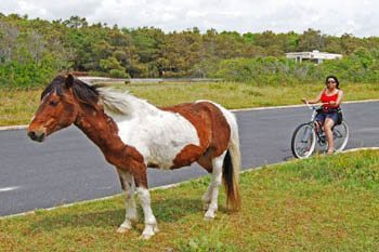 Assateague Island and Ocean City: Summer Fun with Wild Ponies