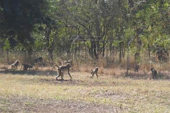 Gorongosa Park, Mozambique
