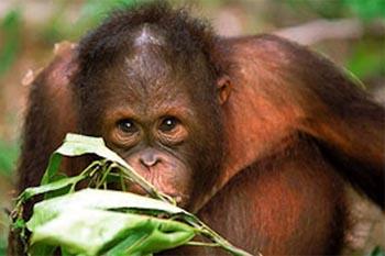 Borneo: Wildlife Lover's Paradise