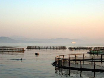 Dolphin pens in Golfo Aranci, Sardinia.Photos by Linda Handiak.