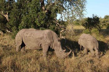 Namibia: Chasing Rhinos on African Time