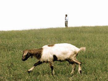 The-lone-shepherd-Puglia