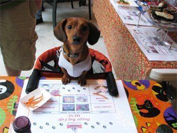dog-at-table