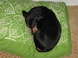 mandarin-dog-bed