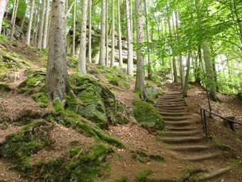 A Woodland Staircase in Echternach, Luxembourg. photos by Sara Bartlesby.