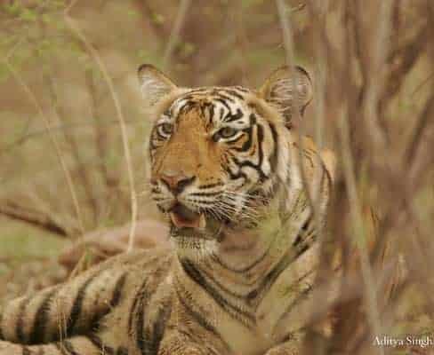 Tigers, Elephants and Jungle Trekking in Kanchanaburi, Thailand