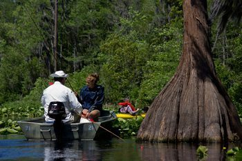 A giant cypress tree along the kayaking route.