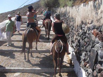 Donkeys in Santorini, Greece.