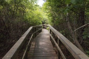 Farm Pond Preserve, a hidden nature reserve right off the bike path in Oak Bluffs.