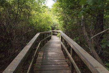 Farm Pond Preserve, a hidden nature reserve right off the bike path in Oak Bluffs.