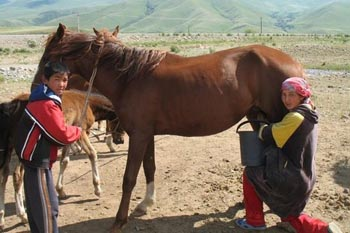 Kyrgyzstan's White Nectar: A Quest for Mare's Milk