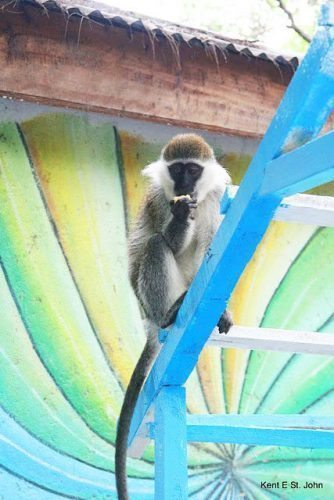 A monkey on a trellis