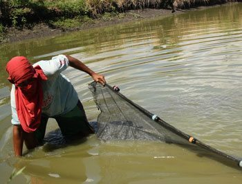 A man dredges a pond for pantat, a mud catfish that is Zarraga's specialty food. Every December the town holds a festival celebrating the fish.