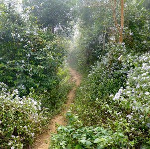 The path to the village in Northern Laos.