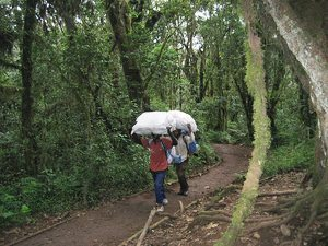 Porters in the Tanzania rainforest.
