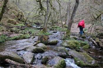 The walk took Downie through streams, woods and fields in France.