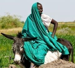 Typical Sudanese woman on a donkey.