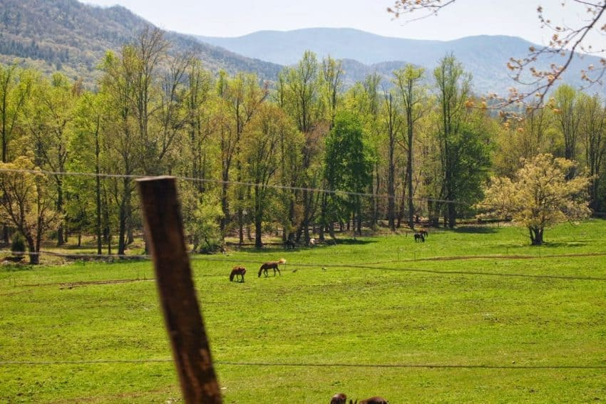 The pretty scenes you can view out the car window as you drive through the Great Smoky Mountains National Park in Eastern Tennessee. Max Hartshorne photos.