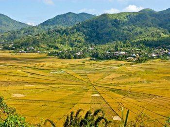 Spider rice fields in Flores