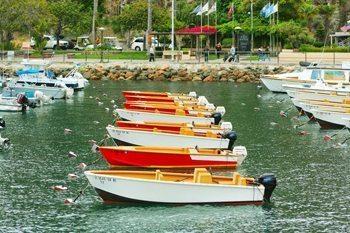 Catalina boats in the harbor.