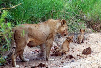 Animal Interactions: Making Responsible Travel Decisions