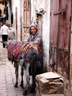 medina donkey