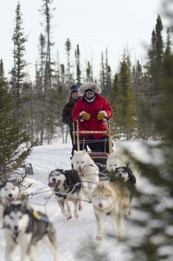 Dogsledding near Churchill, Manitoba.