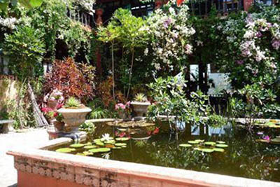 Puerto Vallarta's Botanical Gardens.