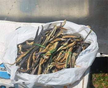Dried brinjal, a common ingredient in Bhutanese cooking.