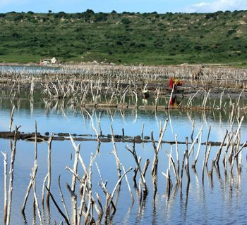 A woman works to collect salt formed by evaporation in a salt lake. Individual plots are marked out with rows of sticks.