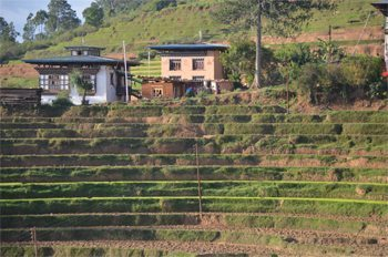 Bhutan's terraced rice fields.